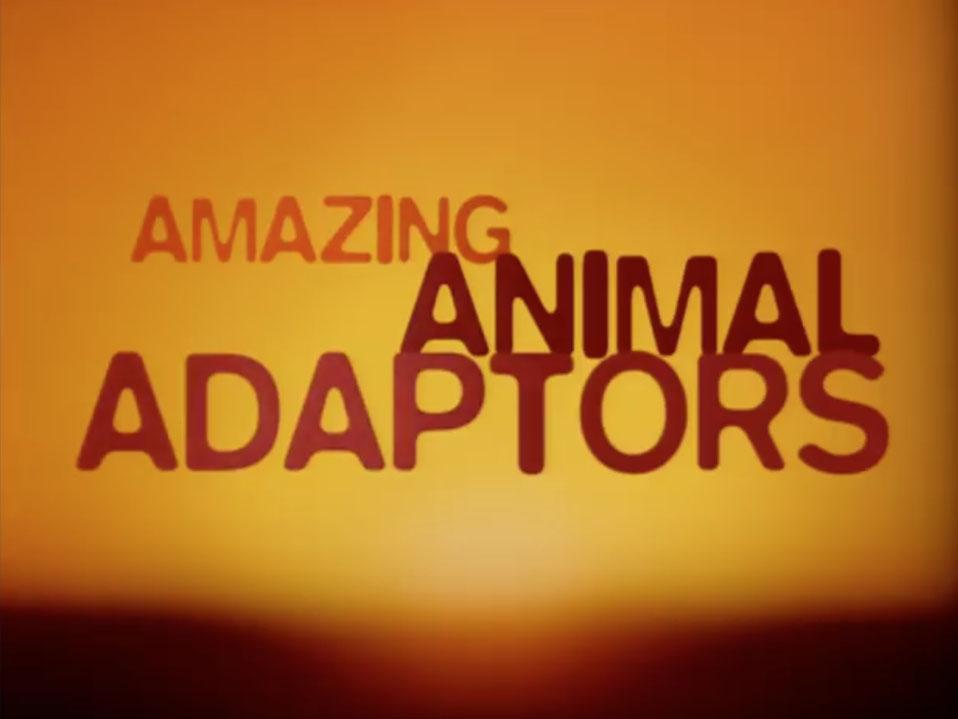 TAF-Titles-stills_0029_AmazingAnimalAdaptors.jpg