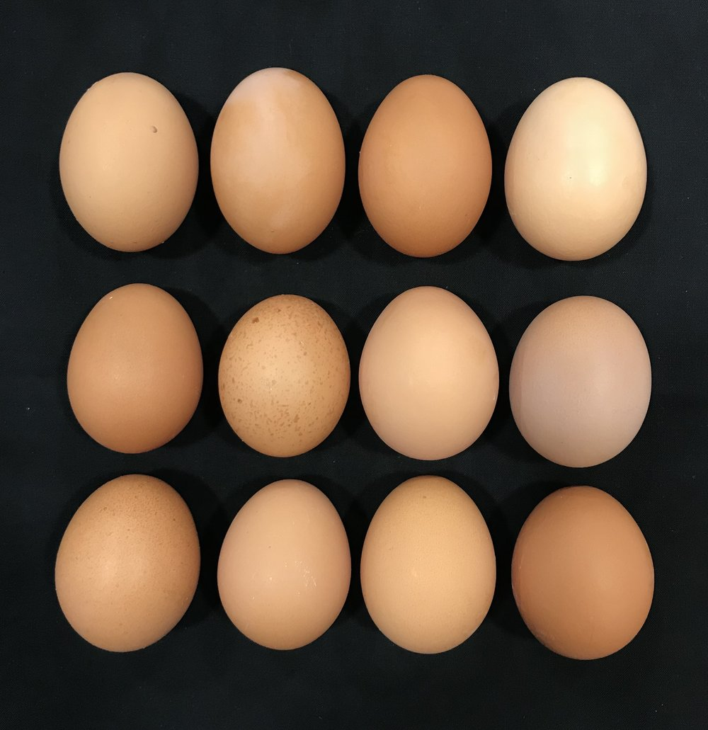 1 Dozen Eggs - Organic, Pasture Raised. $7