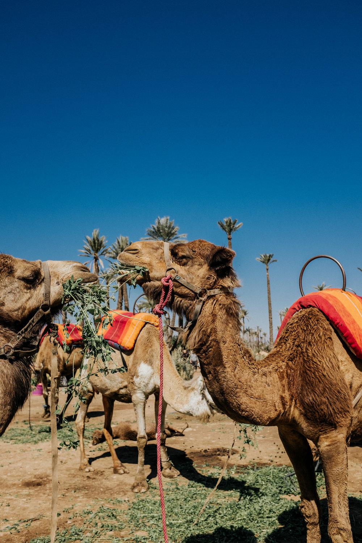 Morocco_2018_02_11_144146-01252_CMB.jpg