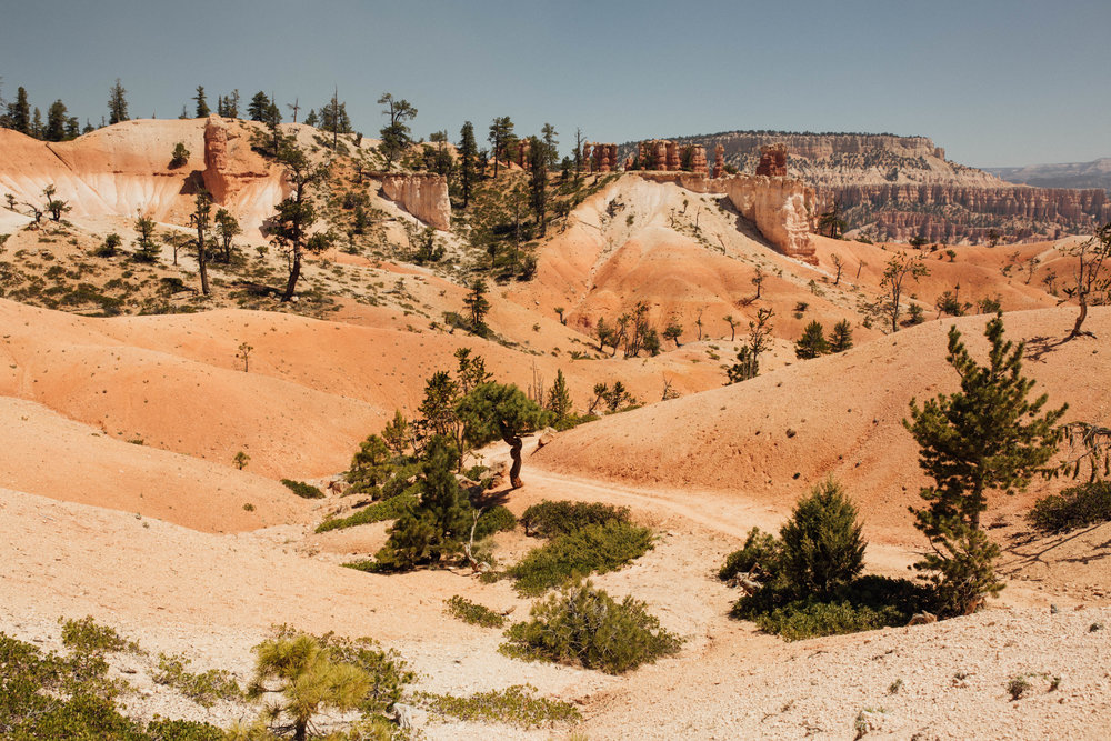 Bryce Canyon National Park - Nature Photography