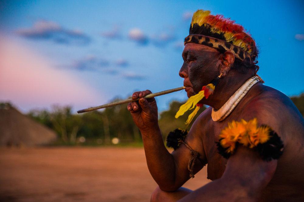 A Tribo -