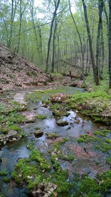 Streambed of Solid Bedrock near  Little Falls