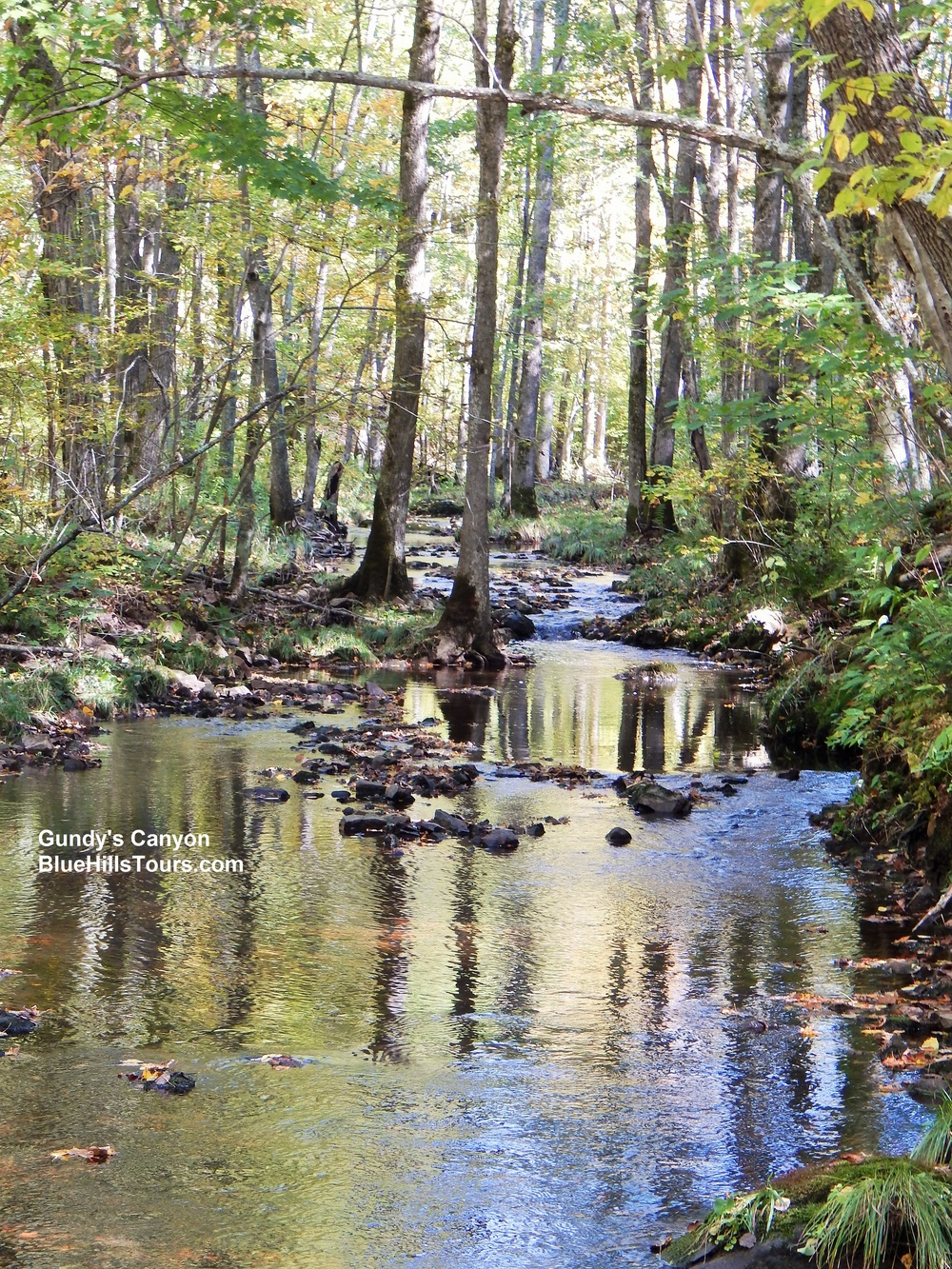 Rock Creek Leaf It 2015.jpg