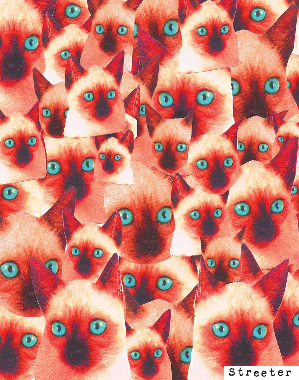 cathead555.jpg