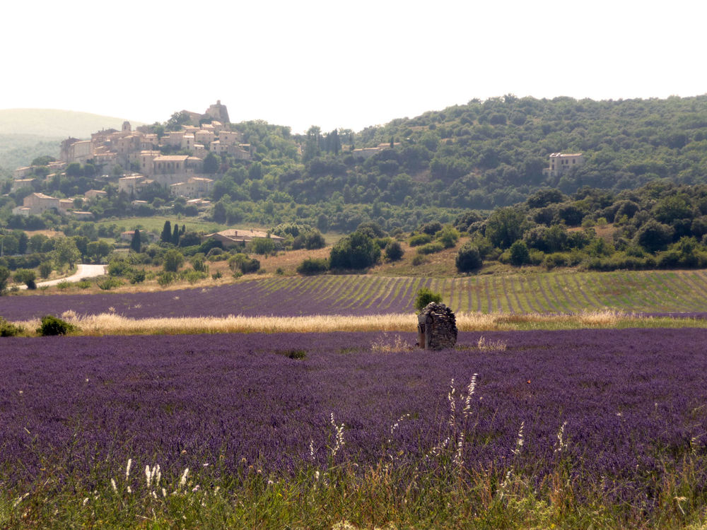 simiane with lavender .1.2.jpg