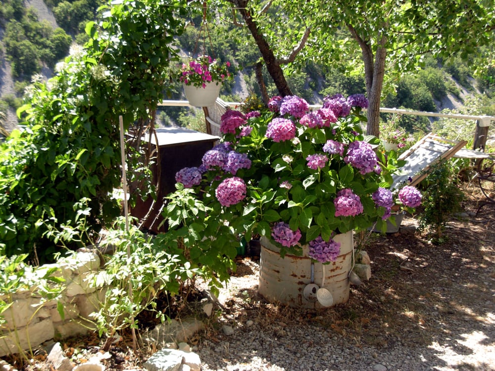 flowers in banon .1.2.jpg