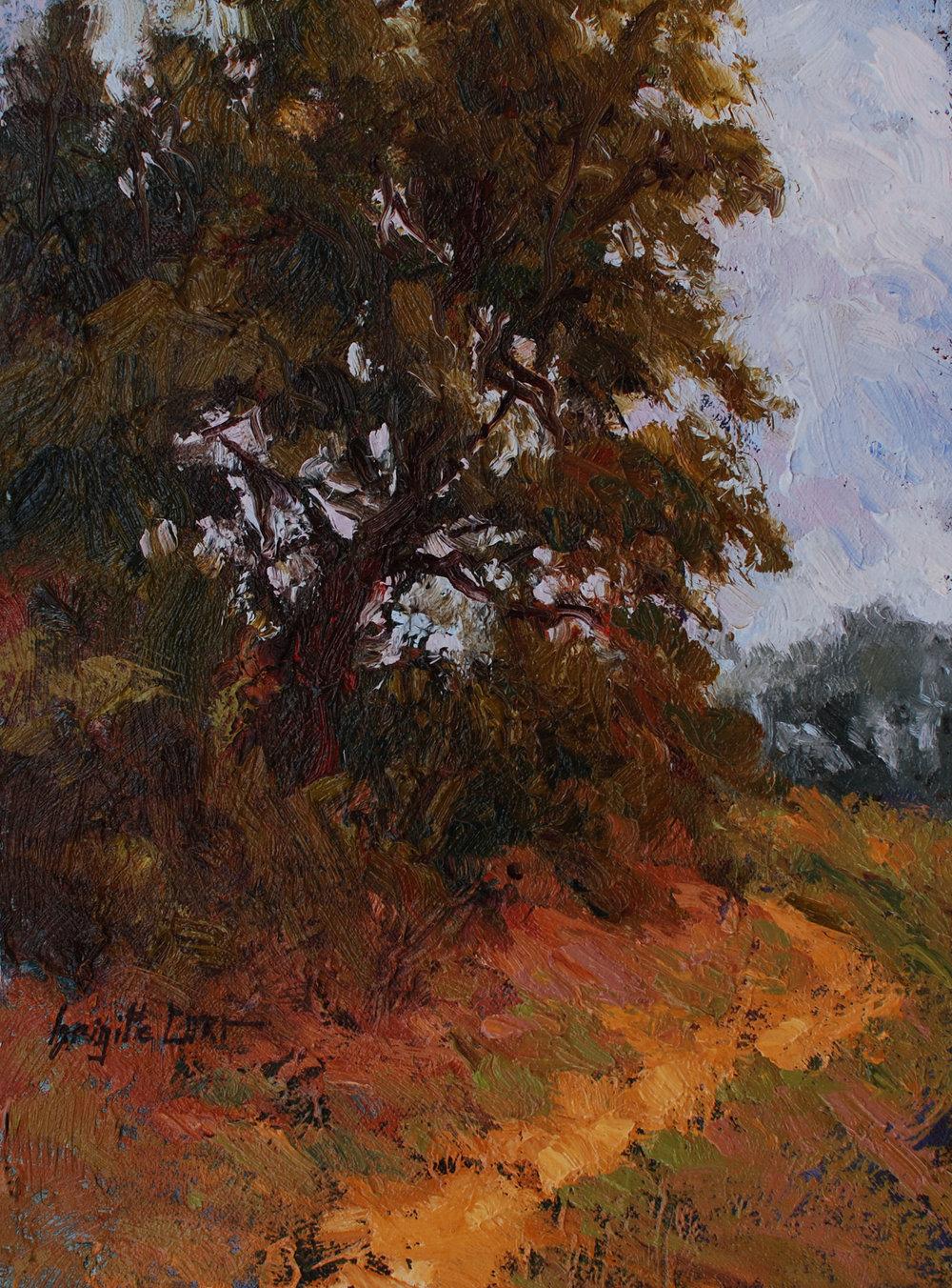 California Oak EMO  12 x 9