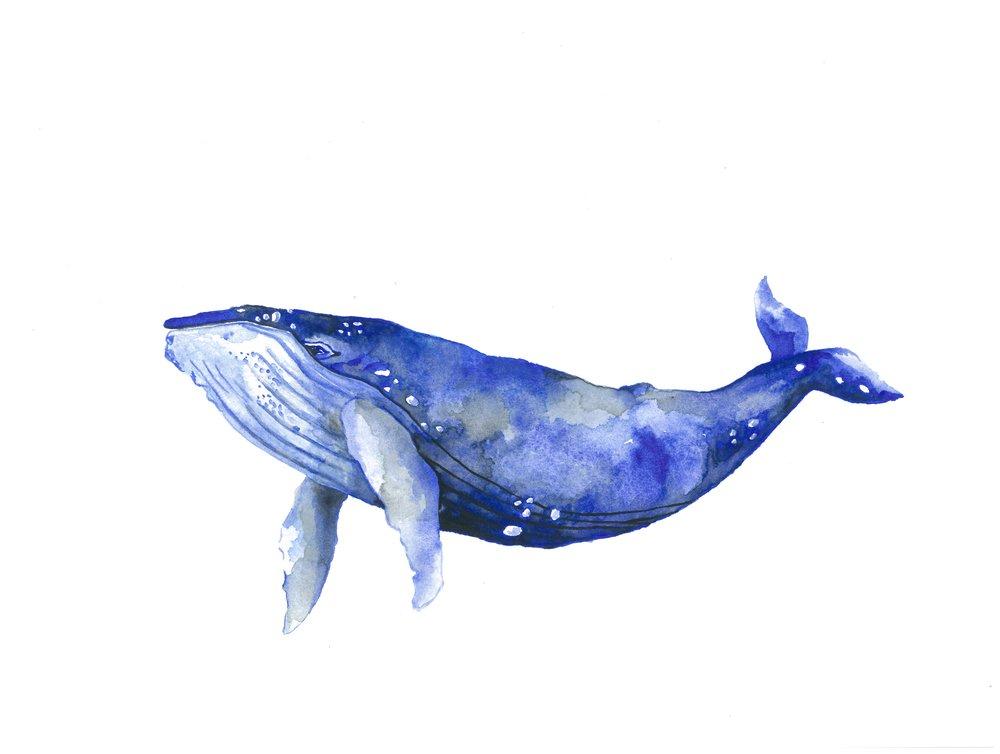 The Whale Beach Deli
