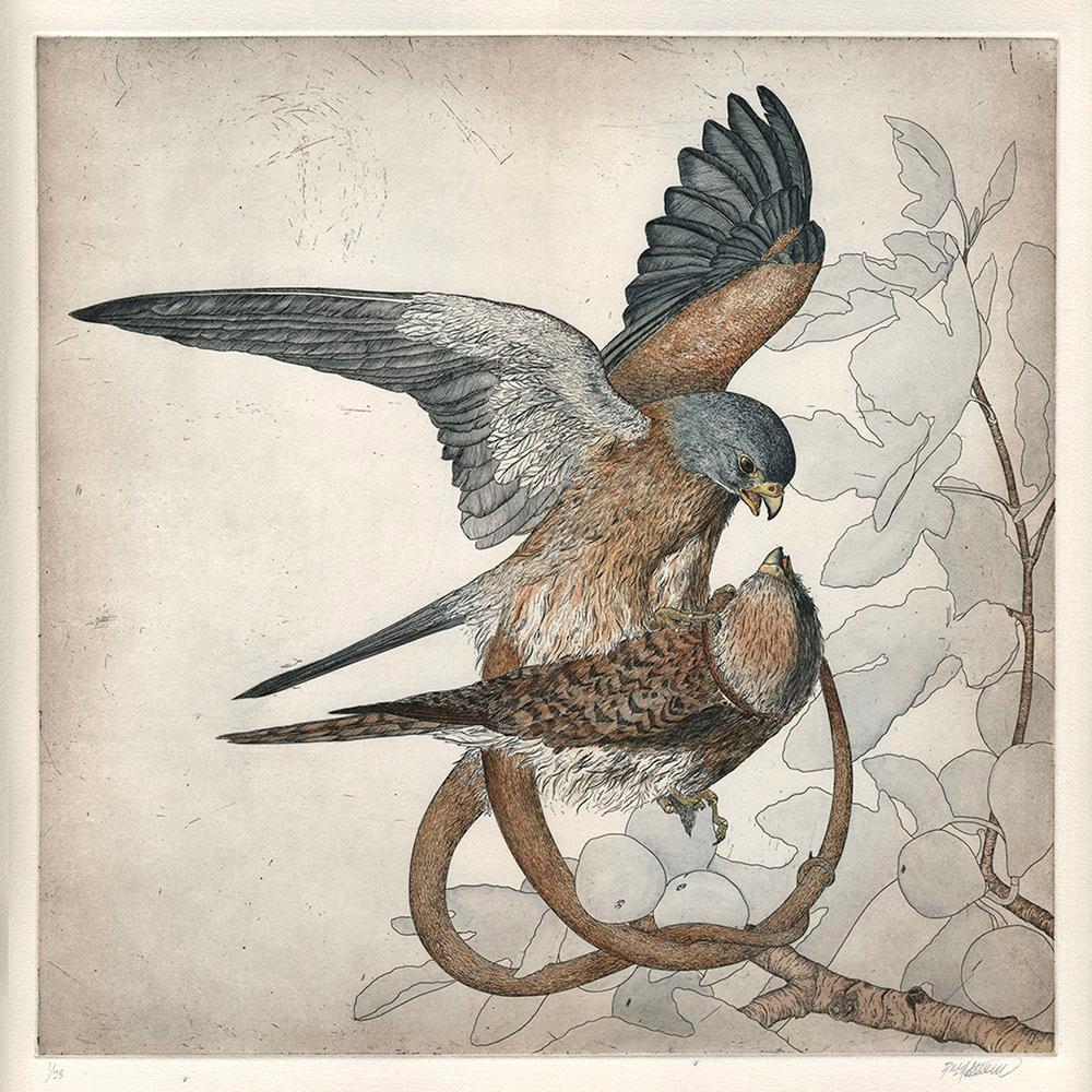 Falco Serpentes I