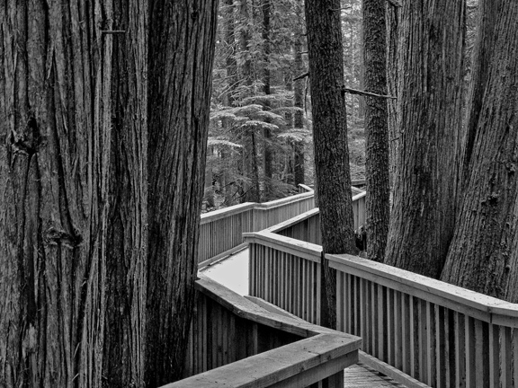 Trees With Boardwalk, Photograph, Ed Severinghaus