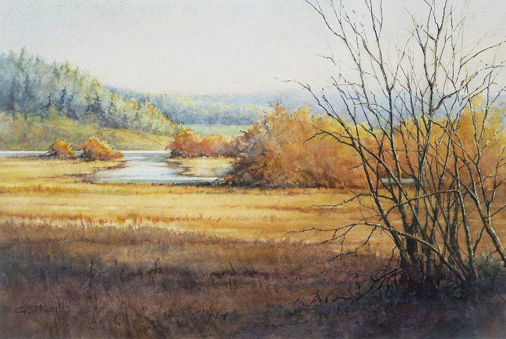 Deer Lagoon Shadows