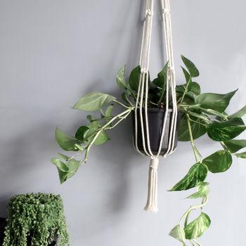 normal_macrame-natural-fibered-white-plant-hanger.jpg