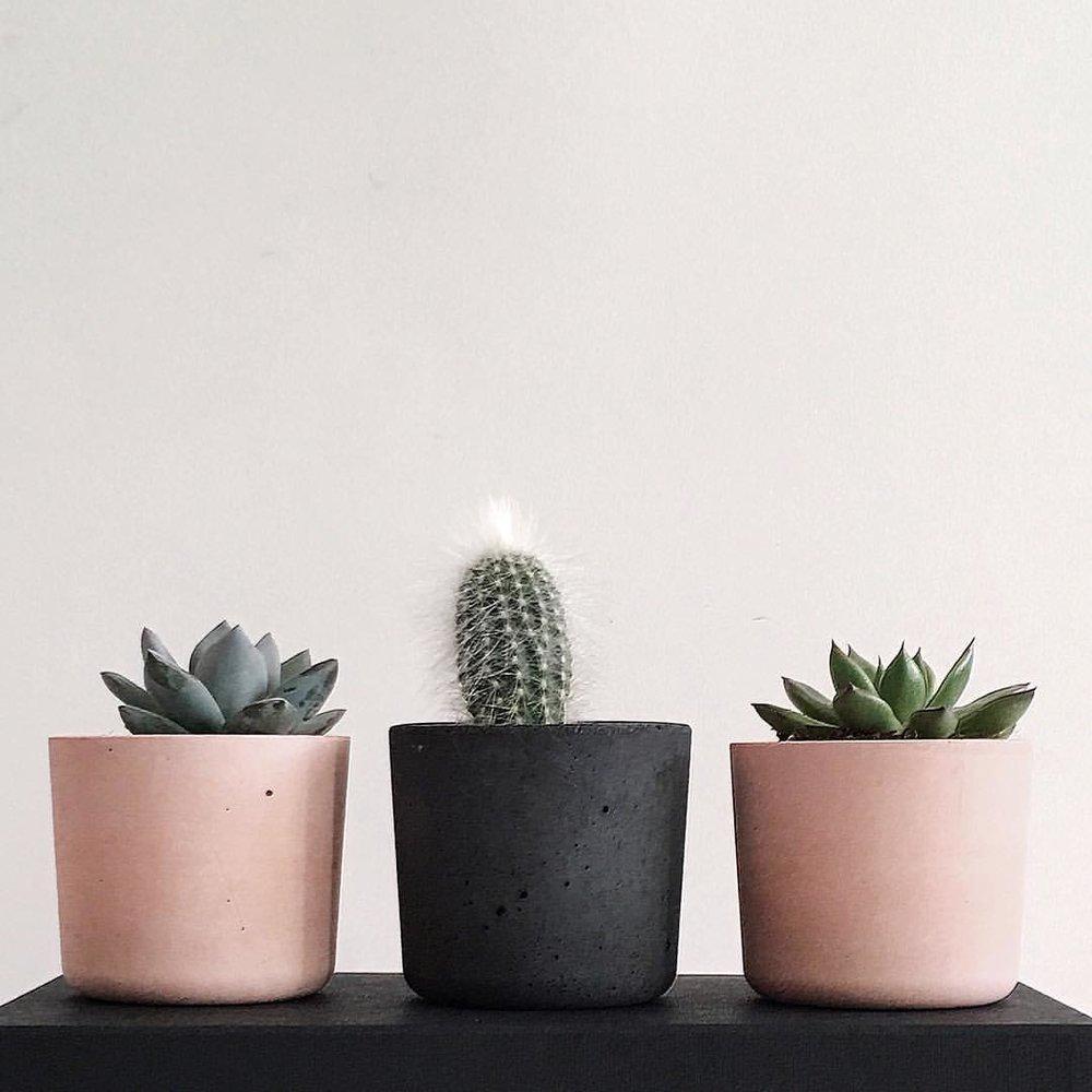 Mini Concrete Pots: The Plant Lab