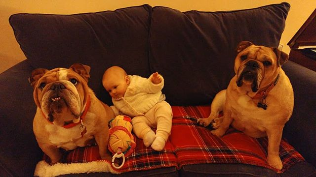 Stay... #daddydaycare #6monthsold #bulldogs
