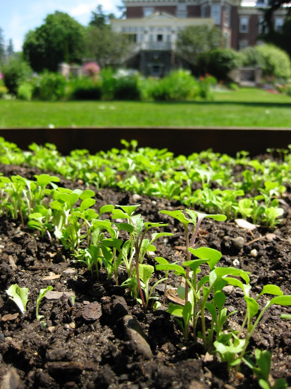 Sprouting plants in gardens at WSInn