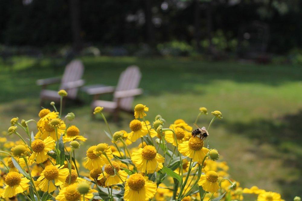 Busy Bee pollinating the Inn's Garden