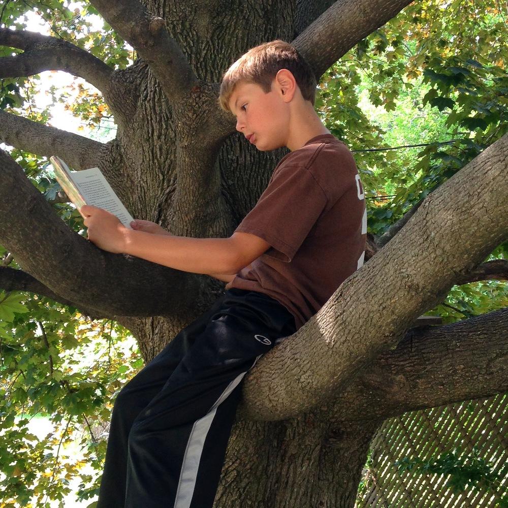 reading-tree.jpg