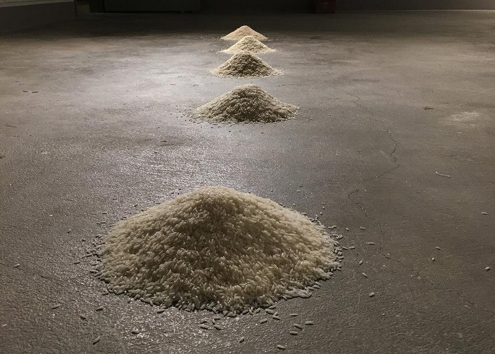 5 Jenis Beras  2017 Jasmine, Bismati and long grain South American rice Installation
