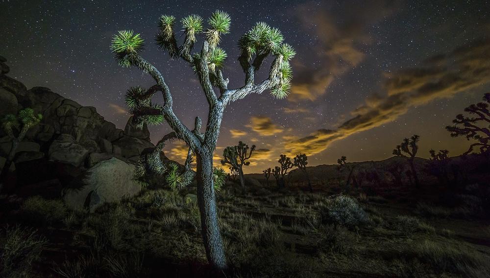 Joshua Tree Photography Timelapse Workshops retreats