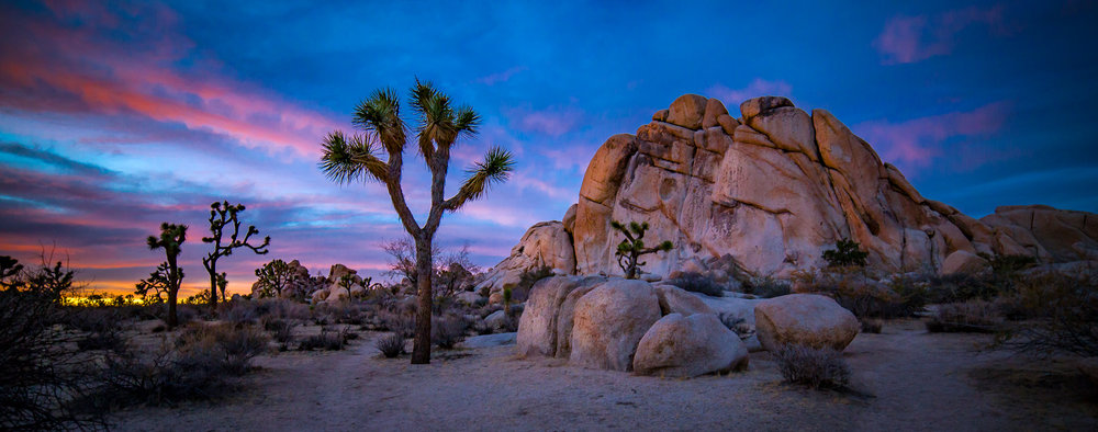 Joshua Tree Workshops