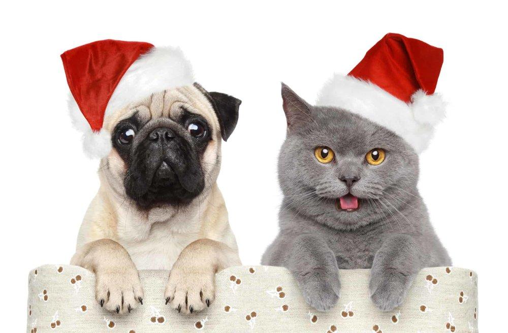 MTC Veterinary Science.jpg