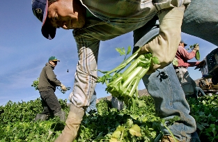 foreign-agriculture-workers_0.jpg
