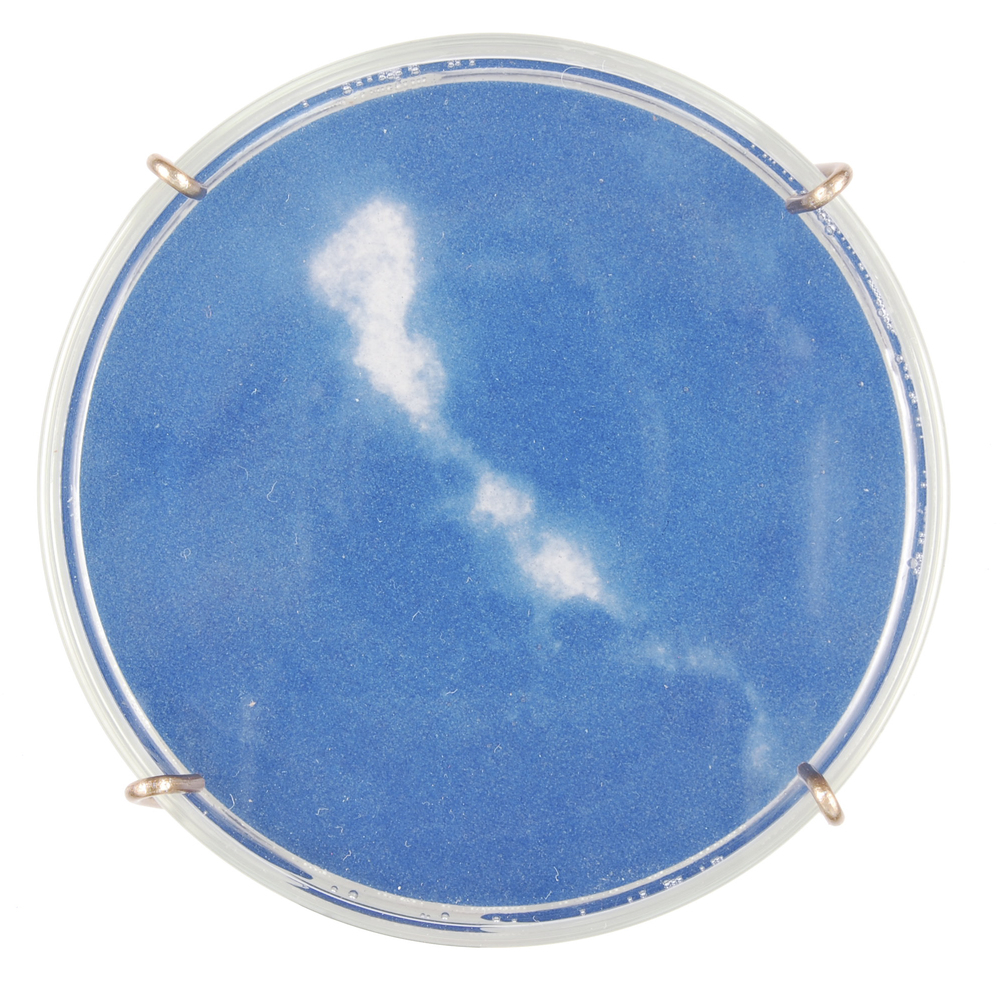 Chlamydia trachomatis III (detail)