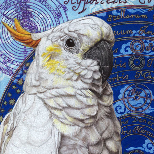 Photorealistic Cockatoo Drawing by Thaneeya McArdle