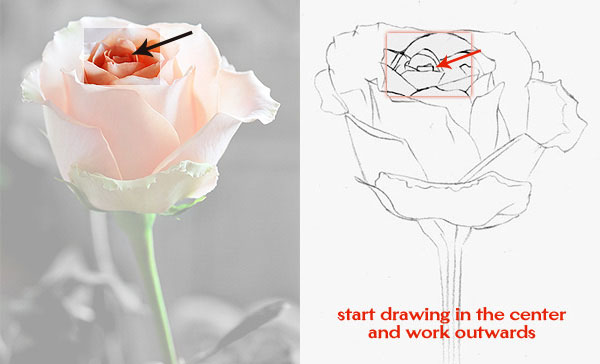 How to draw a rose learn to draw rose pencil drawings art is fun how to draw a rose ccuart Image collections