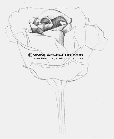 Learn how to draw a rose