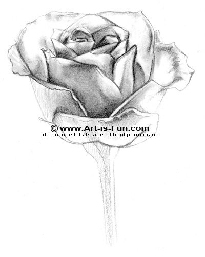 How to Hand Draw a Rose