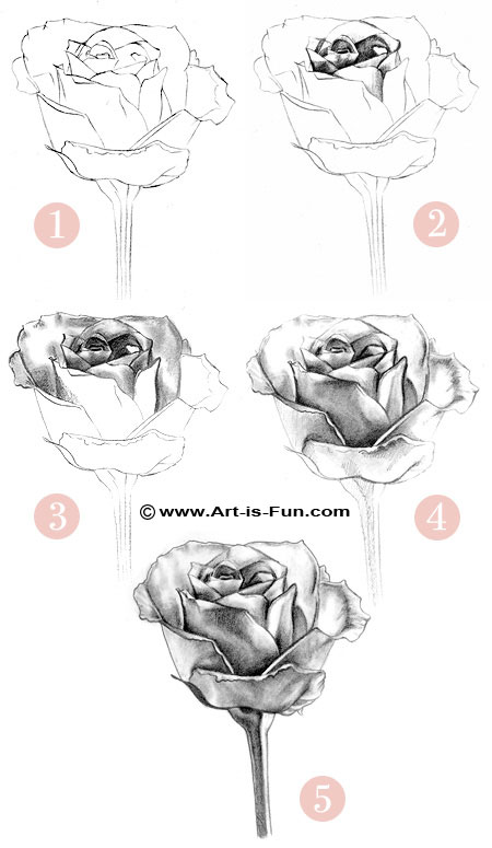 Steps of Drawing a Rose