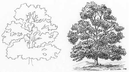 how-to-draw-trees.jpg