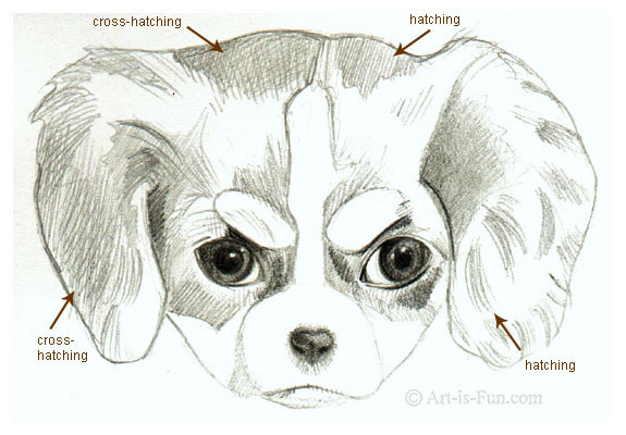 Hatching and Cross-Hatching when drawing a puppy