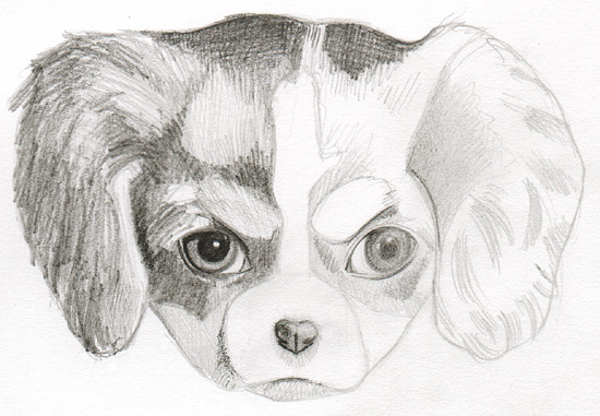 Drawing a puppy