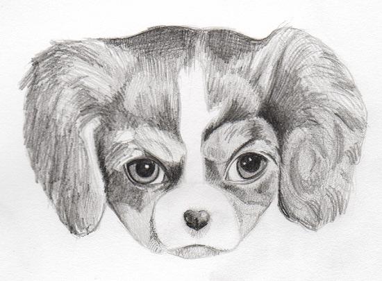 Fun Pencil Drawings Drawing a Puppy on Art is Fun