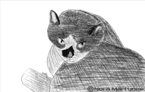 drawing realistic pets from photographs step by step art lessons by
