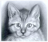 Cat Drawing by Lee Hammond