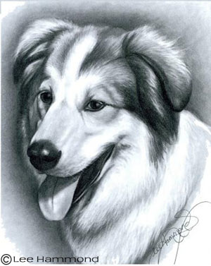 Realistic Dog Drawing Step By Step Drawing Realistic Pets...