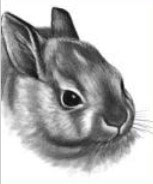 Rabbit Drawing by Lee Hammond