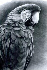 Draw Realistic Animals and Birds