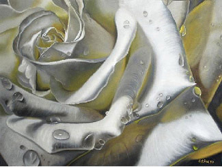 White Rose Close Up, Oil painting by Delmus Phelps