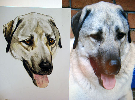 Dog Portrait with Watercolor and Colored Pencil