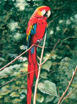 Lee Hammond Parrot Painting