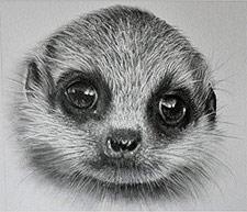 Meerkat Drawing by Doreen Cross