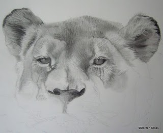Beginning stages of Doreen's pencil drawing of a lioness