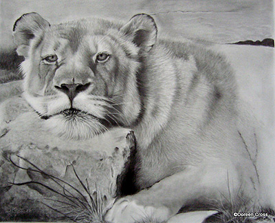 detailed pencil drawings of animals and people by doreen cross art