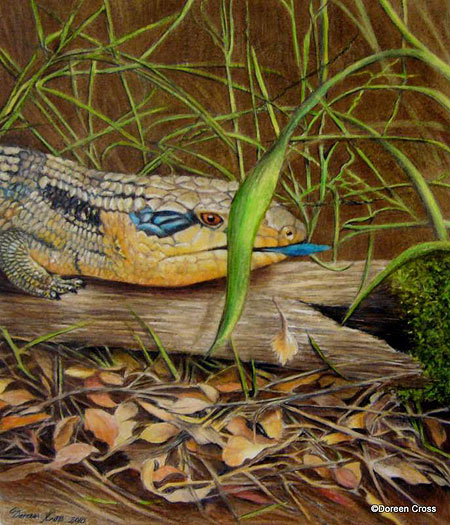 Lizard Drawing by Doreen Cross