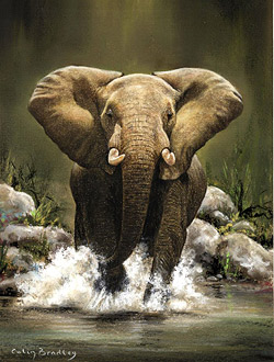 Elephant Pastel Pencil Art by Colin Bradley