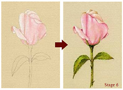 Learn how to draw this rose!